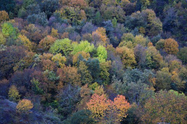 Color de otoño en la falda de Peña Tobía