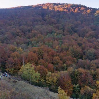 El hayedo recibe a los caminantes vestido de otoño.
