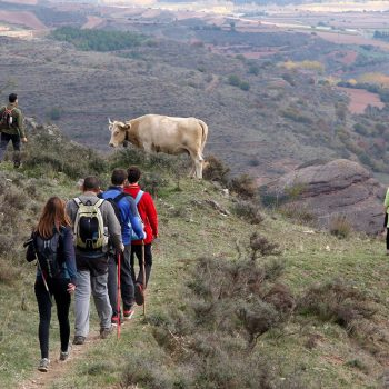 Una vaca parecía querer saludar a los caminantes a su paso.