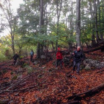 Los colores del otoño todavía estaban solo en las copas de los árboles