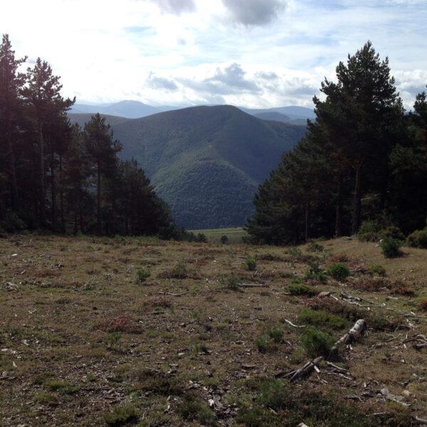 Parte superior del cortafuegos, junto al Alto de La Pradilla.