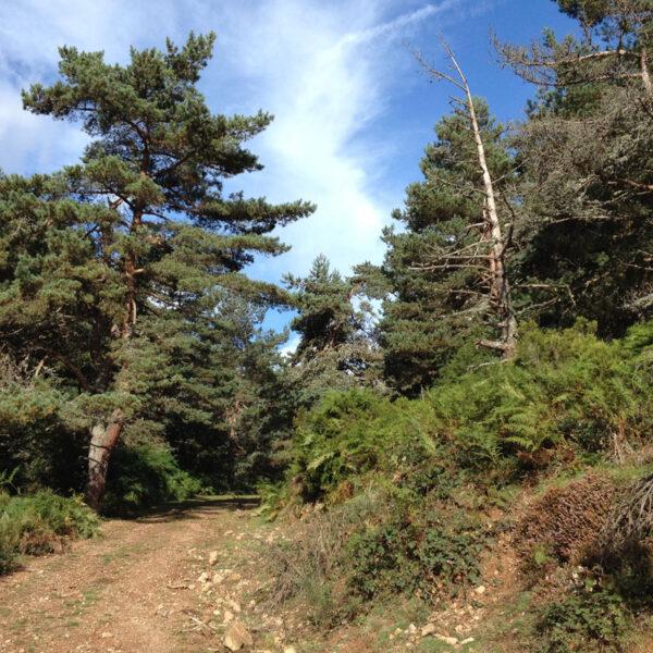 Entrada al pinar desde el Barranco de Navar.
