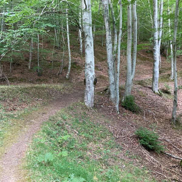 Subiendo el camino de Valvanera