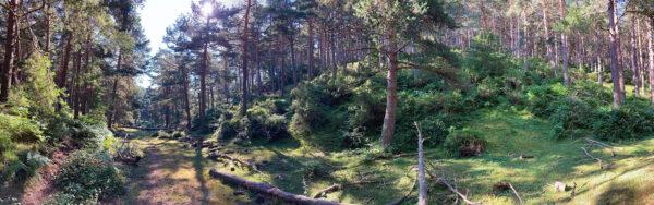 Panorámica del pinar de Navar
